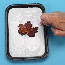 Fall plaster project for children